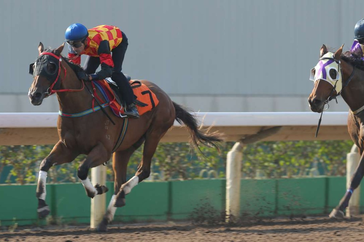 Blinkers bring the best out of Bond Elegance in a recent trial and the three-year-old looks well placed in a straight race on debut on Sunday at Sha Tin. Photos: Kenneth Chan