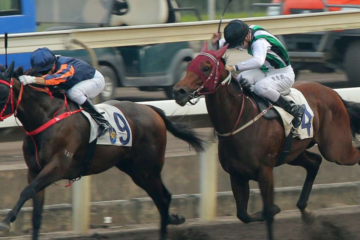 People's Knight (outside) guns down Red Dancer on the dirt earlier this month. The four-year-old is one of eight entries for John Moore in the Hong Kong Classic Mile on January 22. Photos: Kenneth Chan