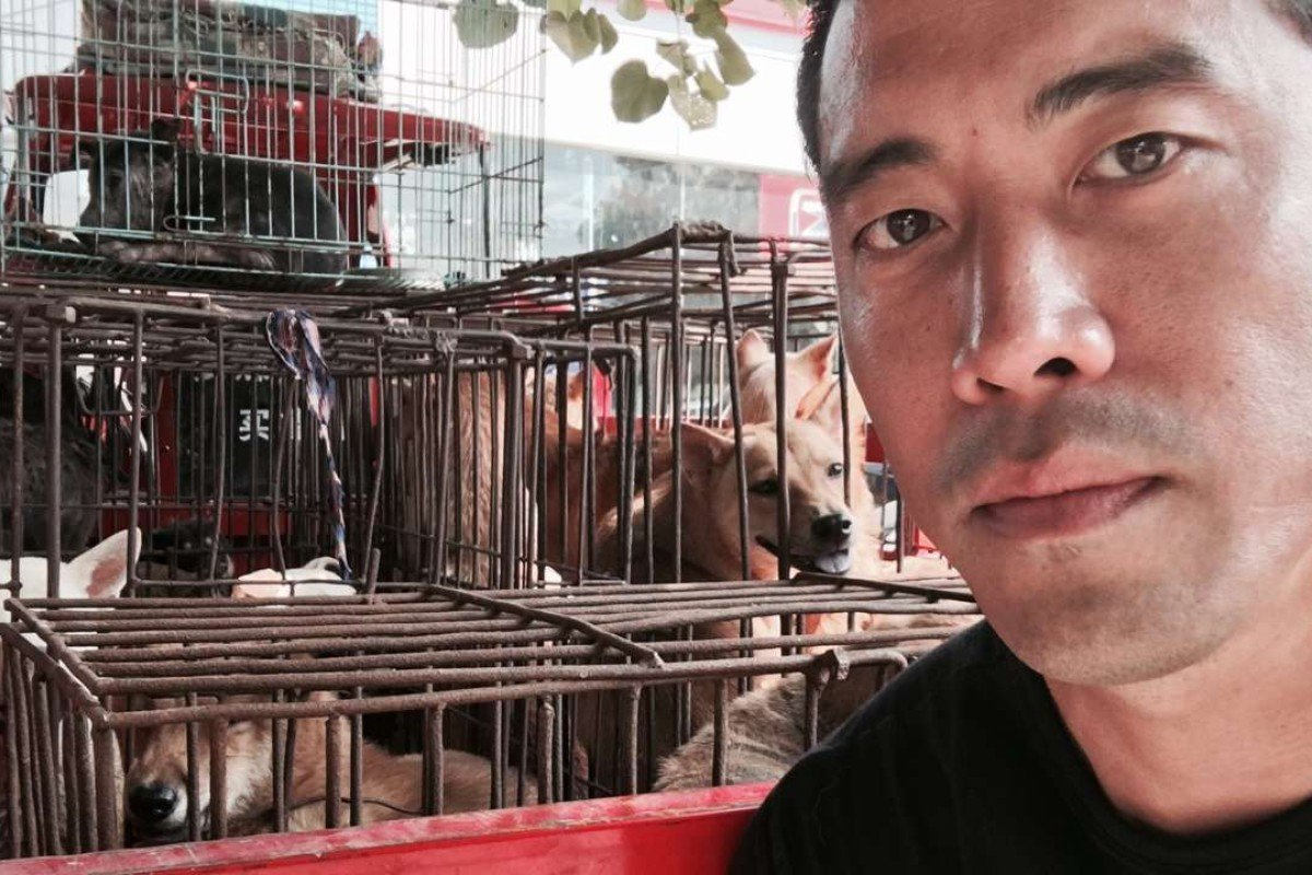 Marc Ching with some of the dogs he rescued from slaughterhouses in Yulin in June 2016. Pictures: George Knowles