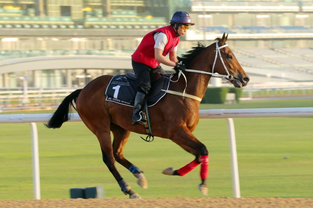 Peniaphobia gallops at Meydan in 2016. Photo: Kenneth Chan