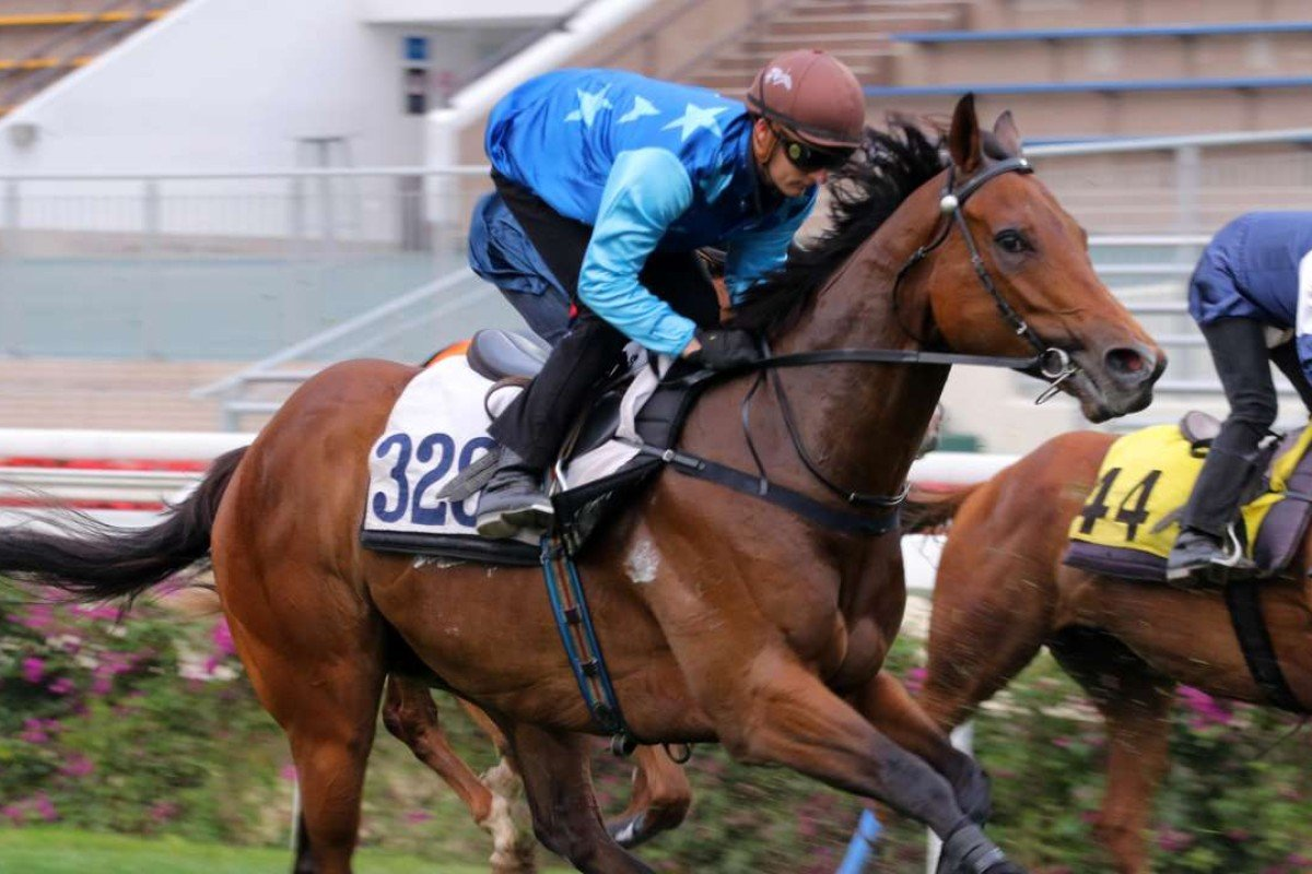 Jing Jing Win trials well ahead of his return on Sunday at Sha Tin. Photos: Kenneth Chan.