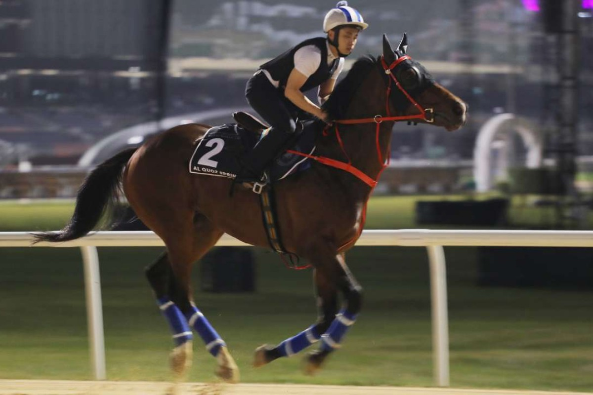 Amazing Kids works on the dirt track at Meydan on Friday morning. Photos: Kenneth Chan