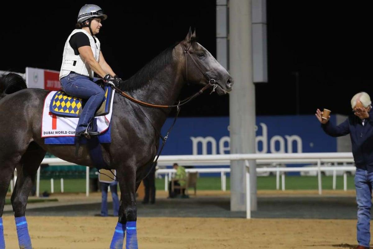 Arrogate and trainer Bob Baffert on the training track in Dubai. Photo: Kenneth Chan