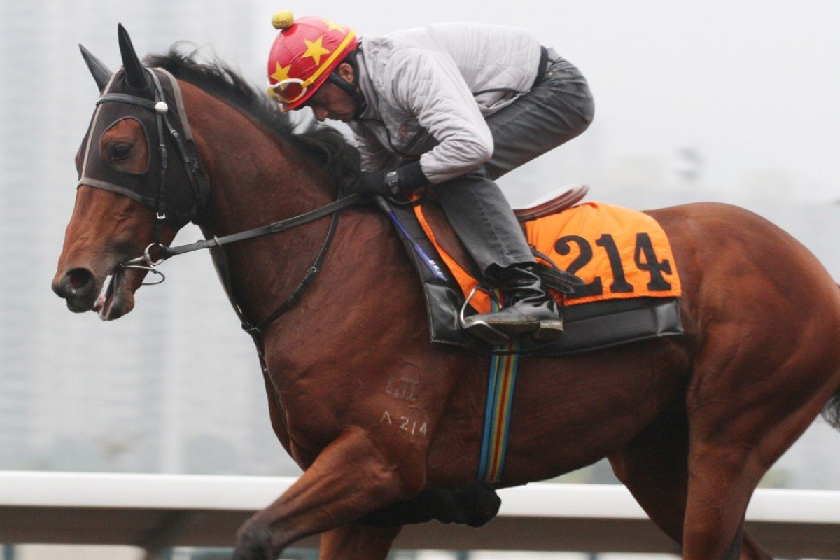 Douglas Whyte gallops Rocketeer at trackwork. Photo: Kenneth Chan