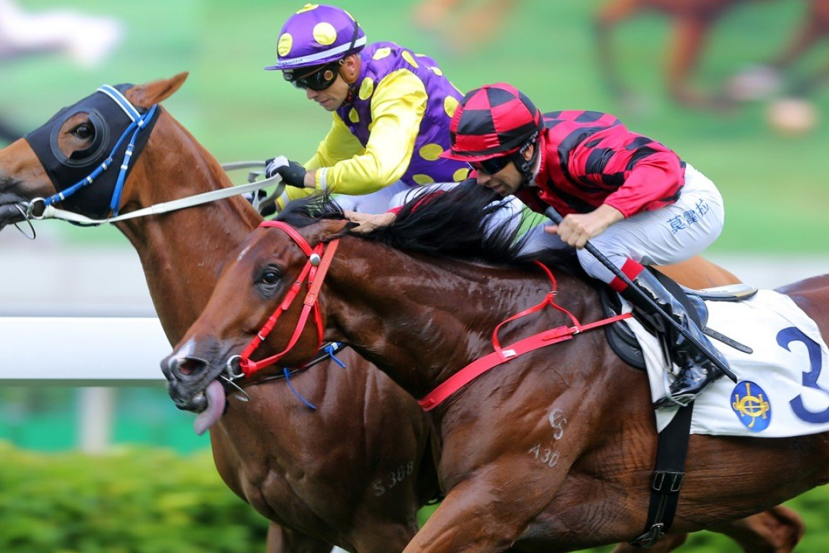 Po Ching Treasure (left) beats out Infinity Endeavour at Sha Tin in June. Photos: Kenneth Chan