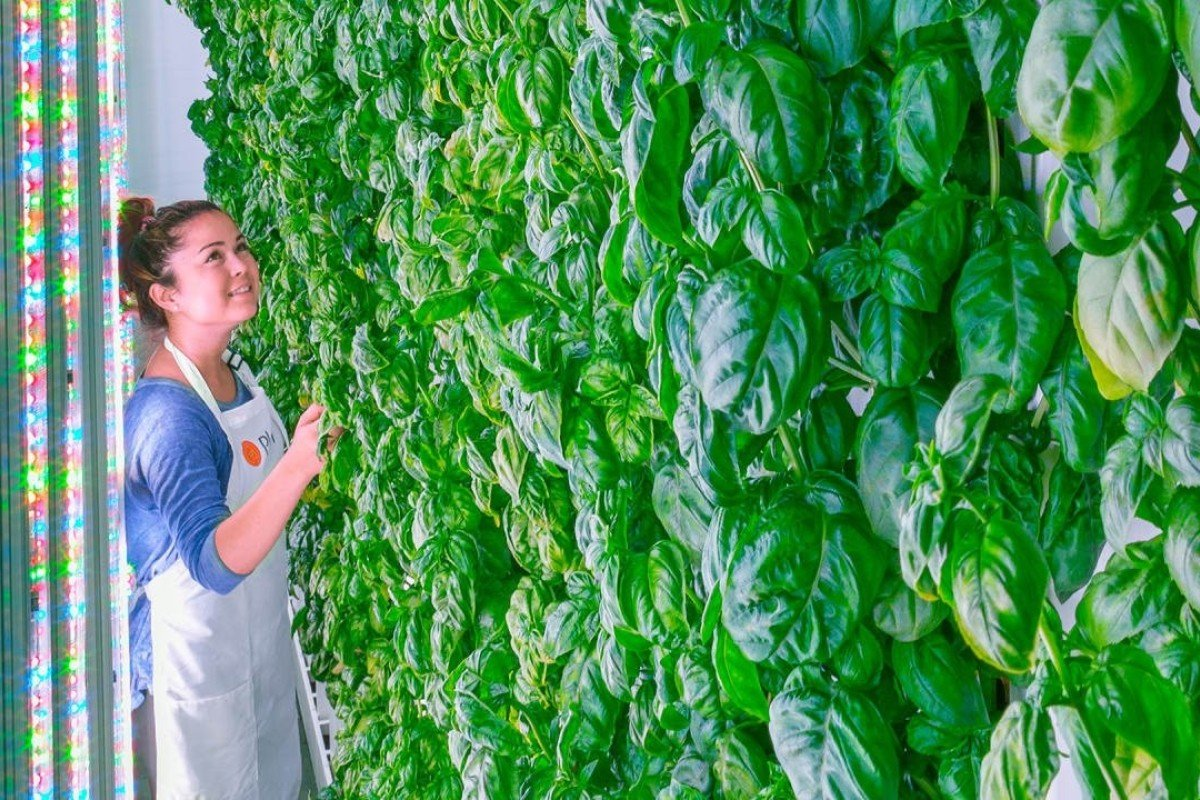 Investors are jumping on the vertical farming bandwagon