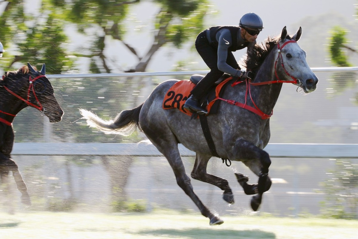 Fifty Fifty works nicely on the Sha Tin turf on Tuesday. Photos: Kenneth Chan.