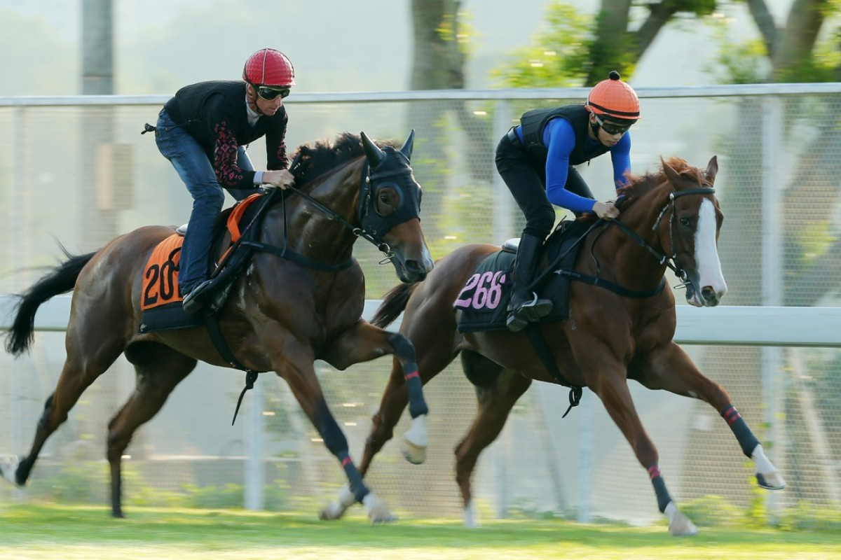Fantastic Show (Nash Rawiller, left) and New Asia Sunrise (Jack Wong) gallop at Sha Tin. Photos: Kenneth Chan