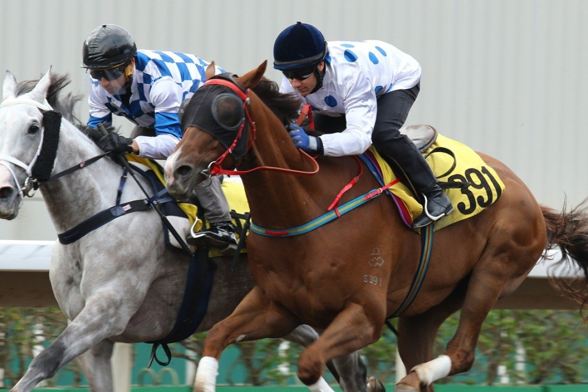 Contentment (right) finishes second to Silverfield in a barrier trial at Sha Tin on Friday. Photos: Kenneth Chan