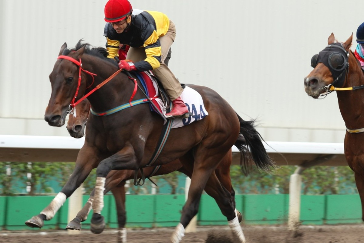D B Pin trials strongly for Olivier Doleuze at Sha Tin on December 1.