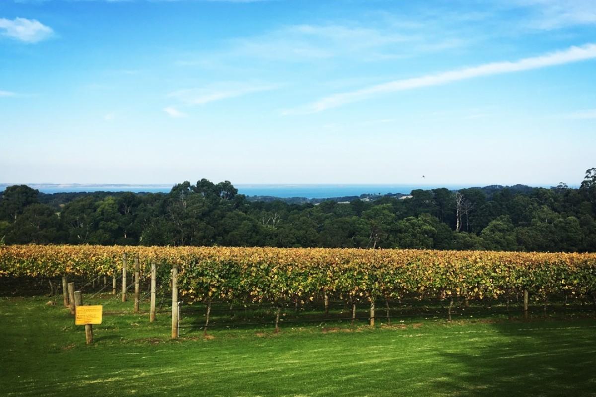 A winery in Australia's Morning Peninsula.