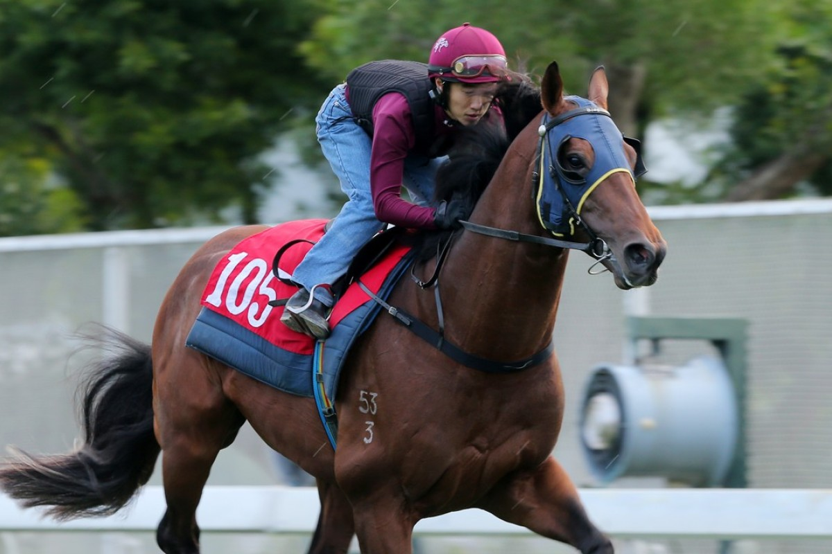 Good Standing gallops at Sha Tin on Thursday morning. Photos: Kenneth Chan