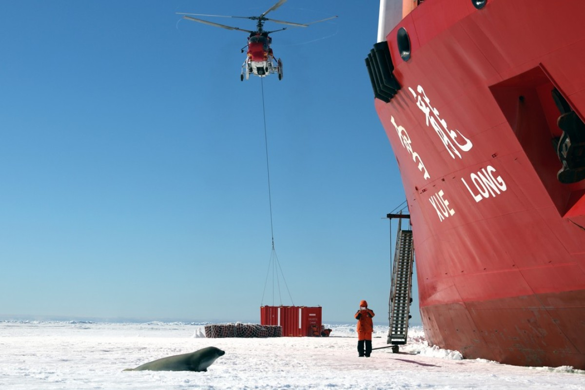 A seal draws near as the Chinese ice-breaker Xuelong unloads cargo on sea ice. Photo: Xinhua