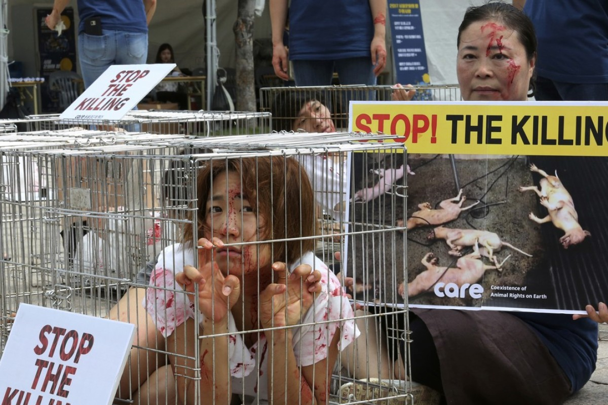 An animal rights activist in Seoul protests against South Korea's culture of eating dog meat. Photo: AP