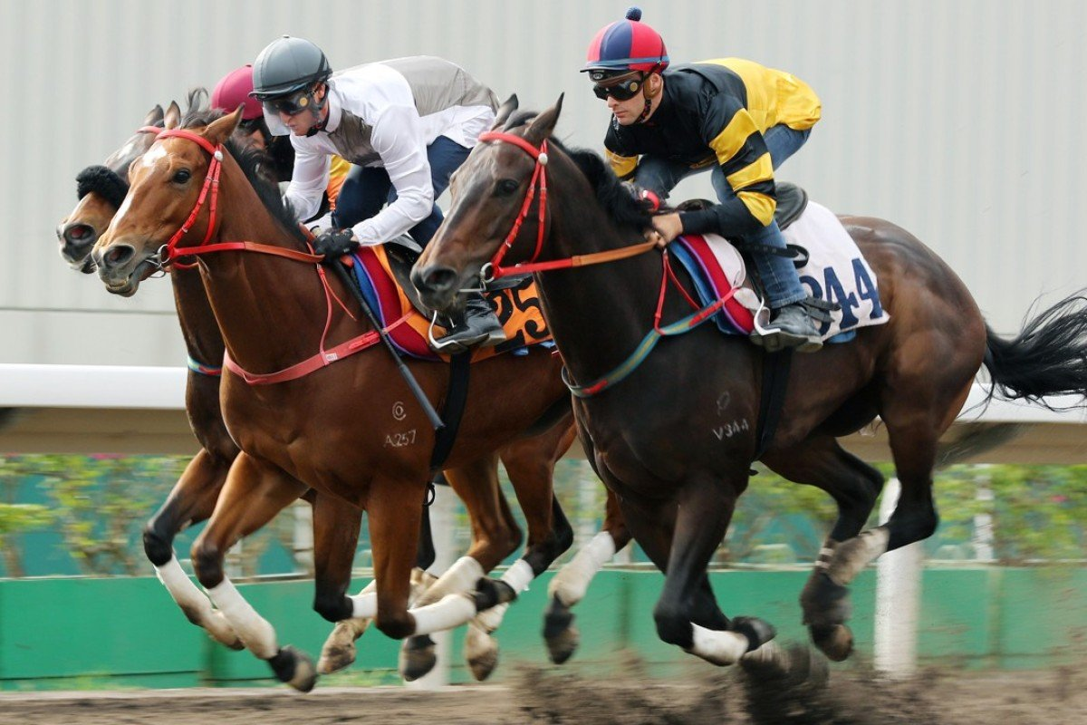 The John Size-trained D B Pin and Ivictory trial together in preparation for Sunday's Group Two Jockey Club Sprint. Photos: Kenneth Chan