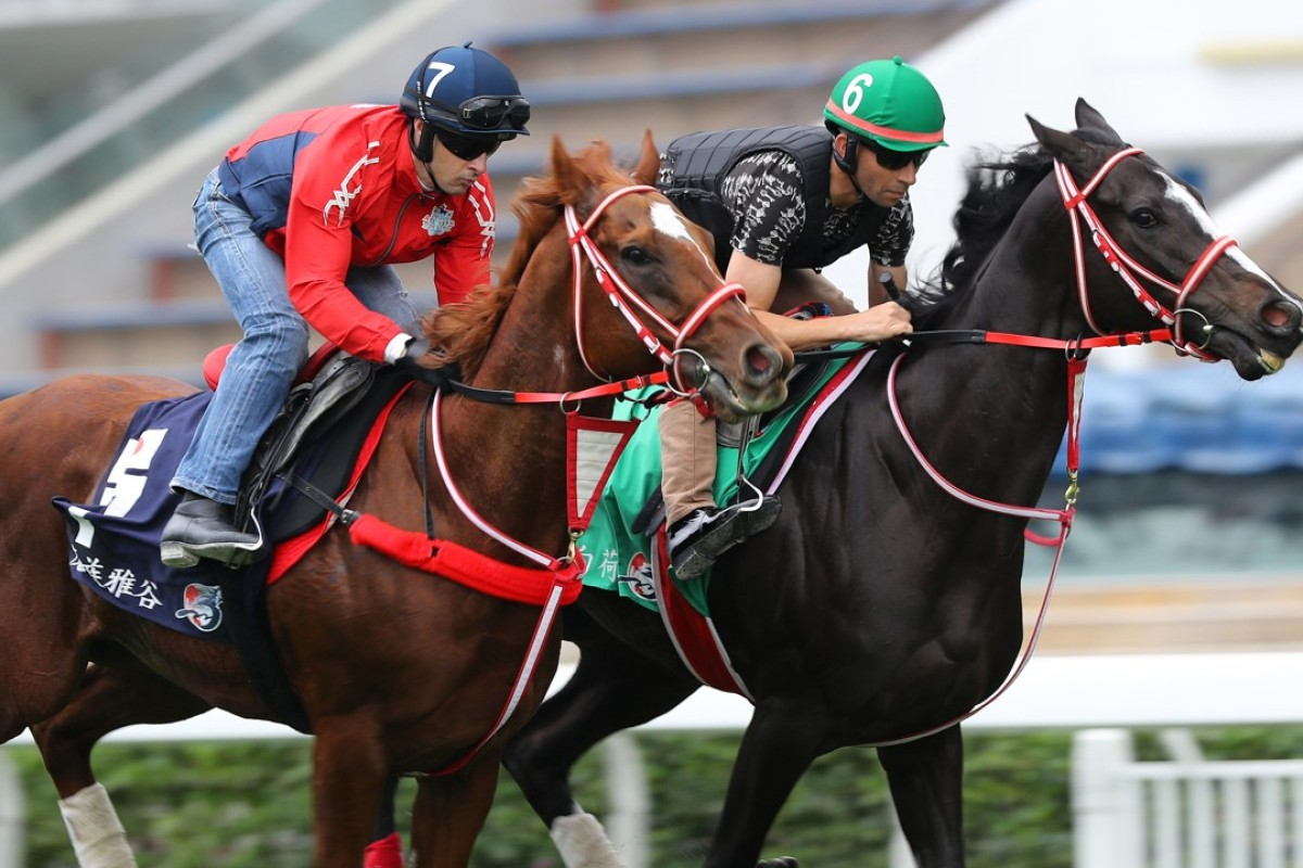 Mozu Ascot (left) and Lys Gracieux gallop at Sha Tin on Wednesday. Photos: Kenneth Chan