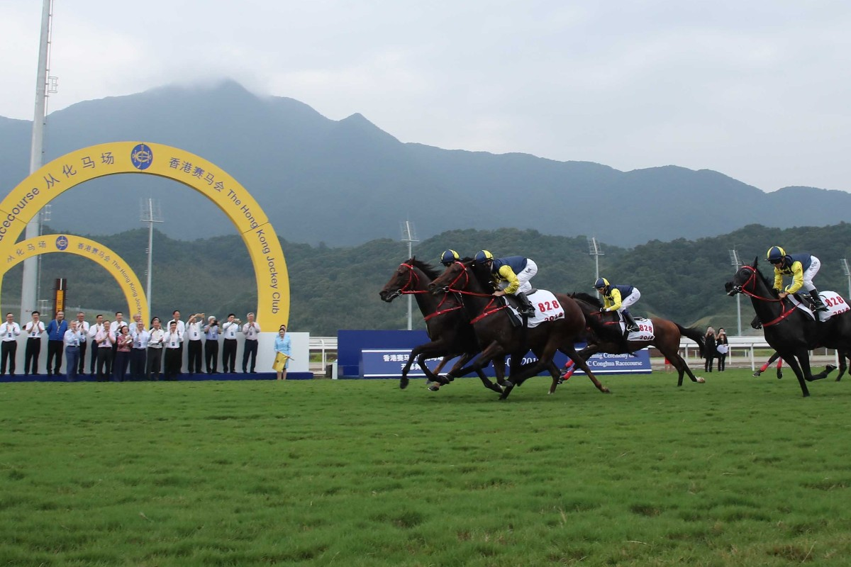 Horses gallop at the opening of the Hong Kong Jockey Club's Conghua Racecourse. Photo: Kenneth Chan