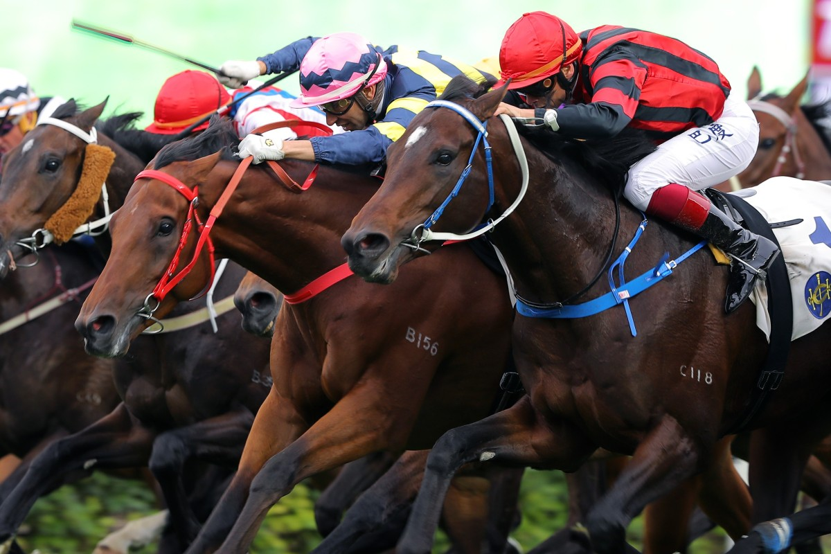 Tigre Du Terre (extreme outside) is beaten by a nostril during his first Hong Kong start last month. Photos: Kenneth Chan