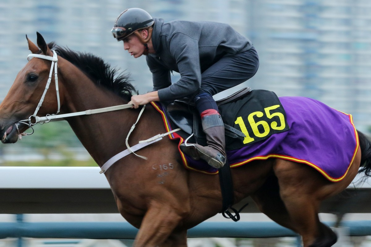 Helene Leadingstar gallops on the all-weather track at Sha Tin earlier this month. Photos: Kenneth Chan